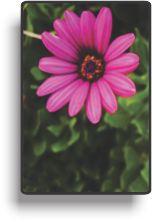indstr corel floral 10kb